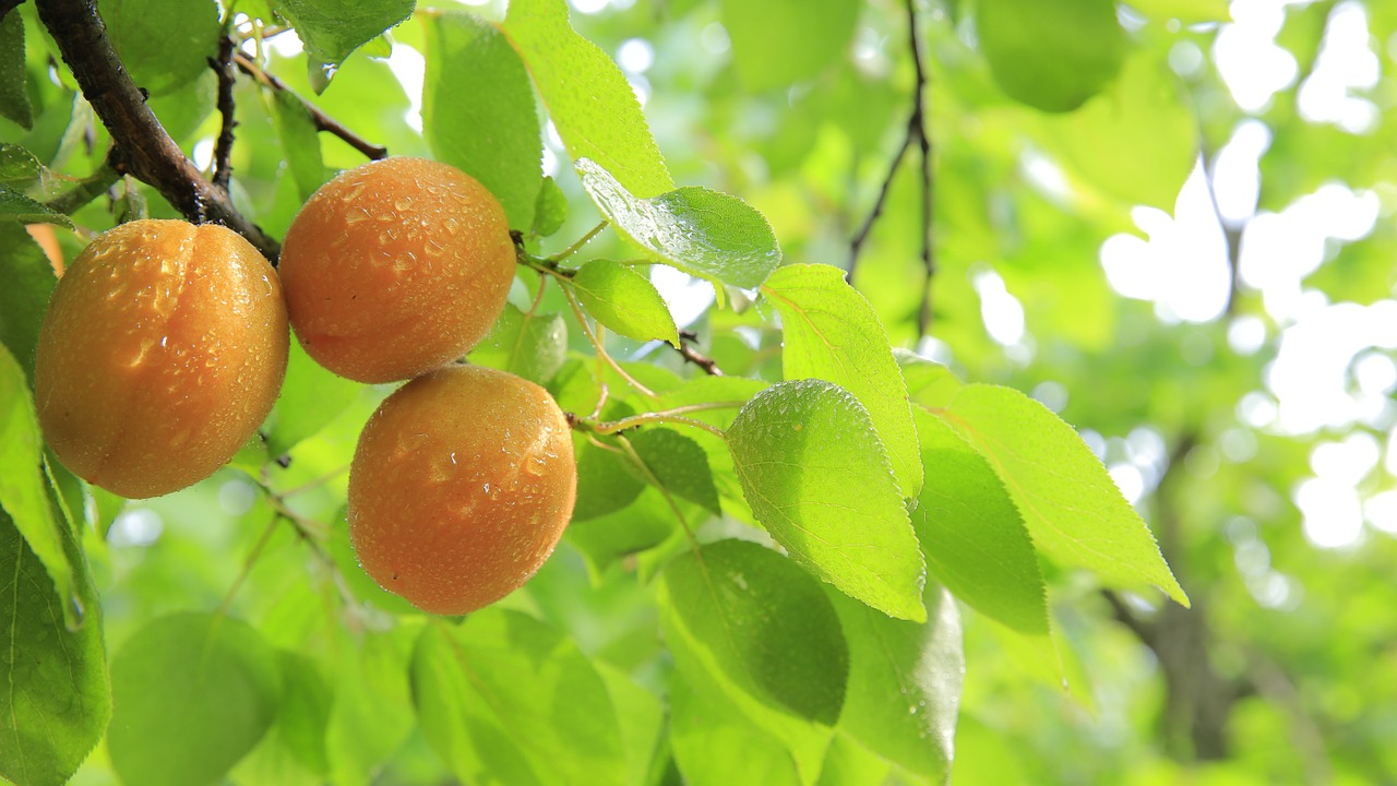 【まとめ】岡山県と山梨県が桃太郎発祥の地として最有力候補